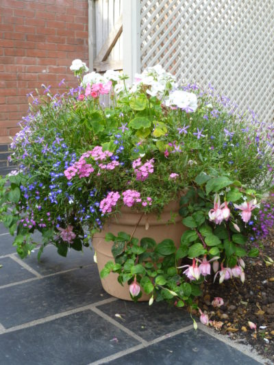 summer bedding plants in a pot