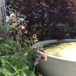 border in a box geum water feature