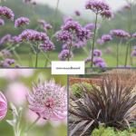 moodboard flowers for a contemporary garden