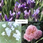 moodboard flowers for cottage garden