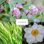 moodboard flowers for evergreen garden