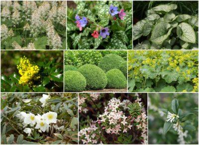readymade border plants for shady garden