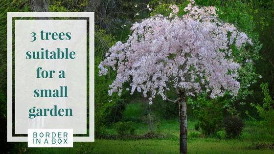 Cherry Blossom Tree For Small Garden