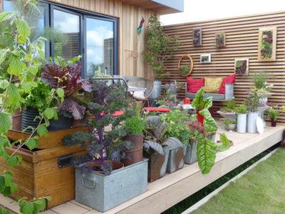 Elaine Portch show garden RHS Malvern