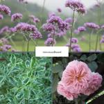 moodboard sensory garden flowers