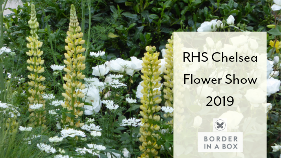 RHS Chelsea Flower Show lemon lupins