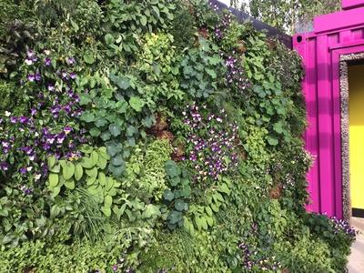 RHS Chelsea vertical garden
