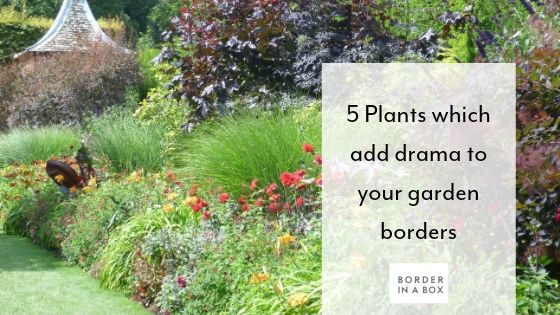 5 plants add drama to garden border