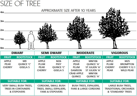 tree sizes walcot nursery