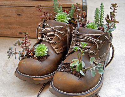 succulents planted in brown laceup gardening boots