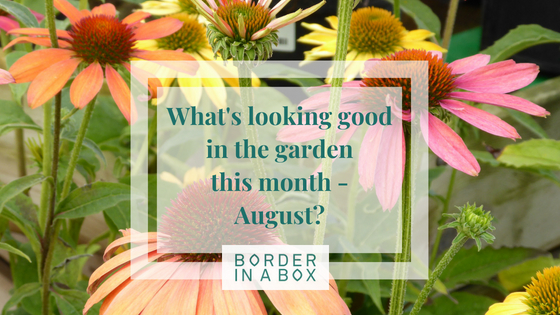 Whats looking good in the garden this month August