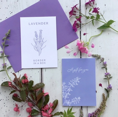 Lavender hidcote seeds card