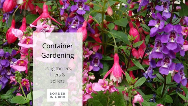 blog header container plants pink mauve