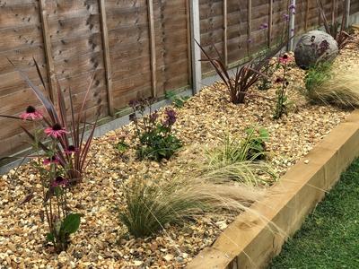 Gravel garden grasses phormiums