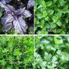 herbs thyme mint parley basil