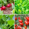grow your own salad tomatoes spinach rocket radish