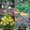 spring bulb mix woodland shady garden