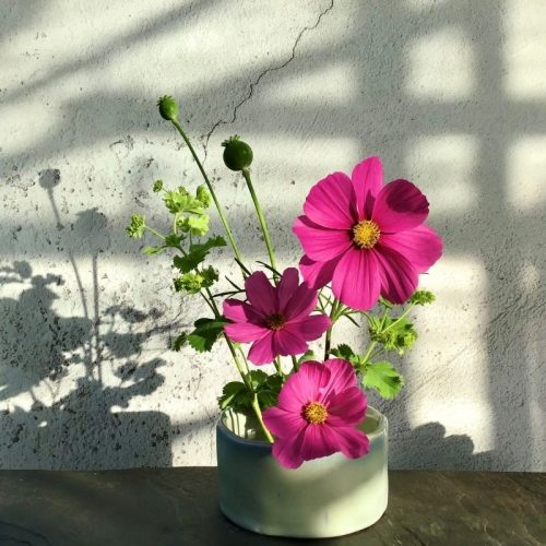 ikebana style bowl with pink cosmos flowers