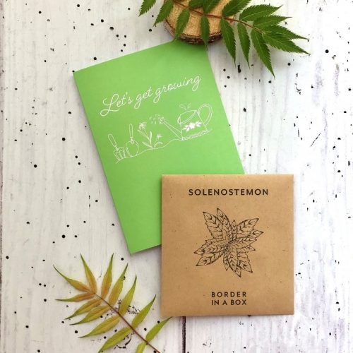 solenostemon seeds card