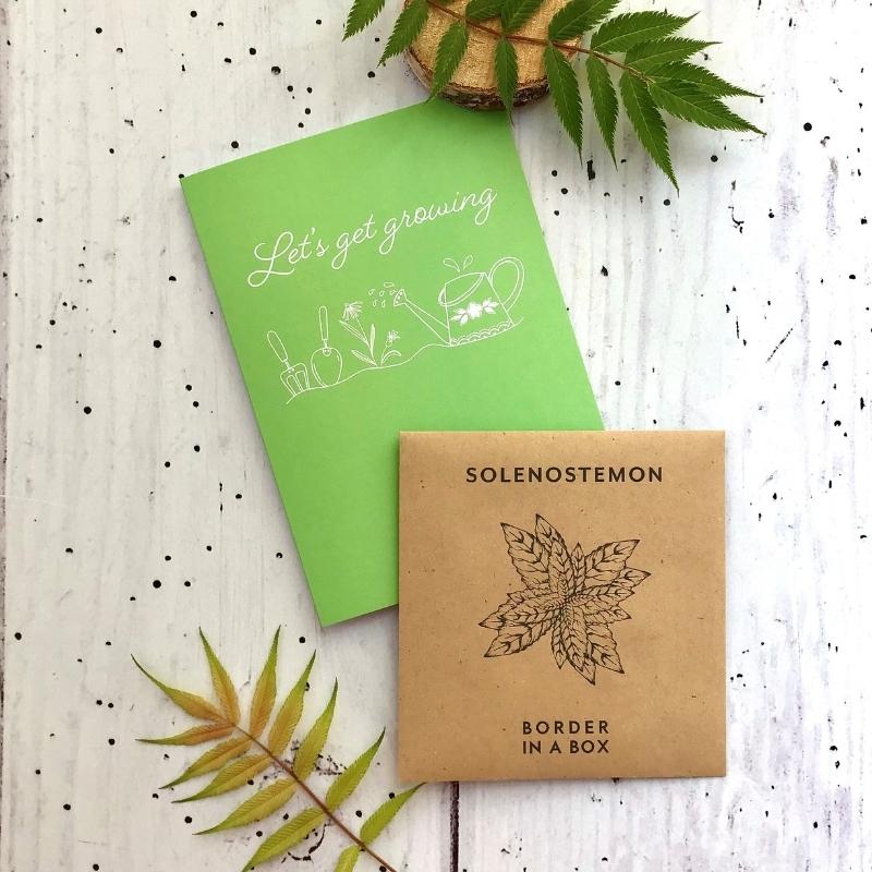 solenostemon seeds card 800 x 800